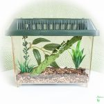 Vivariums & Starter Kits